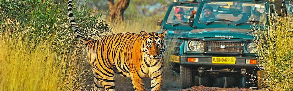 Ranthambore Safari Reservation